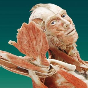 Body Worlds Vital (Please select both date and time of entry)